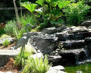 Our new statue of a heron - keeping the pond safe.